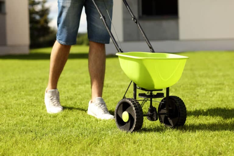 Overseeding A Lawn & The 5 Best Overseeding Spreaders