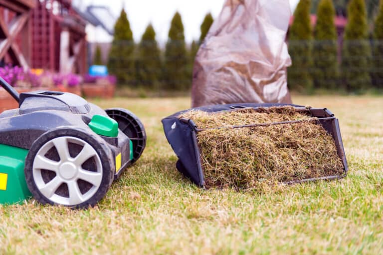 How to Scarify A Lawn & Best Lawn Scarifiers