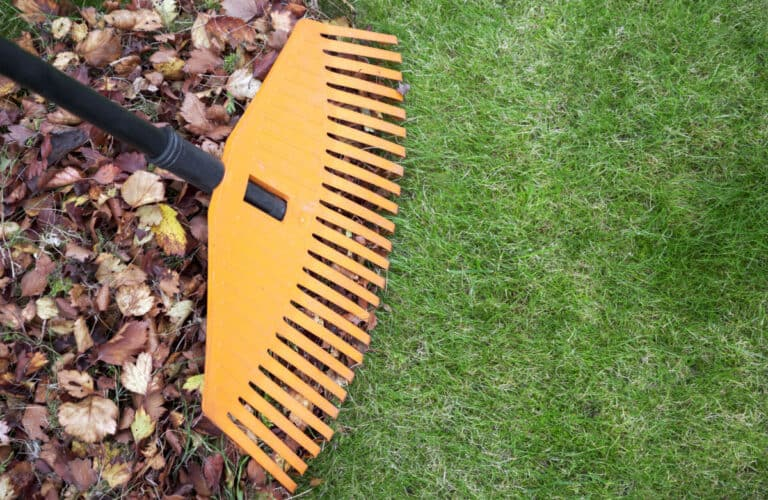 Best Lawn Rakes For Your Yard
