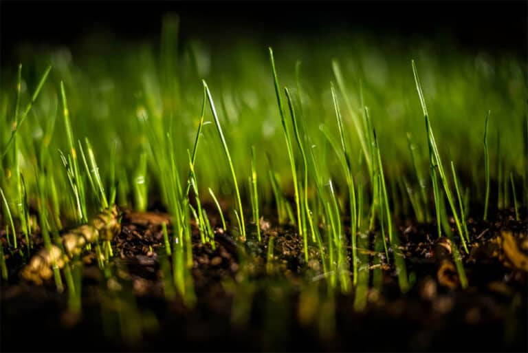 Does Grass Grow At Night?