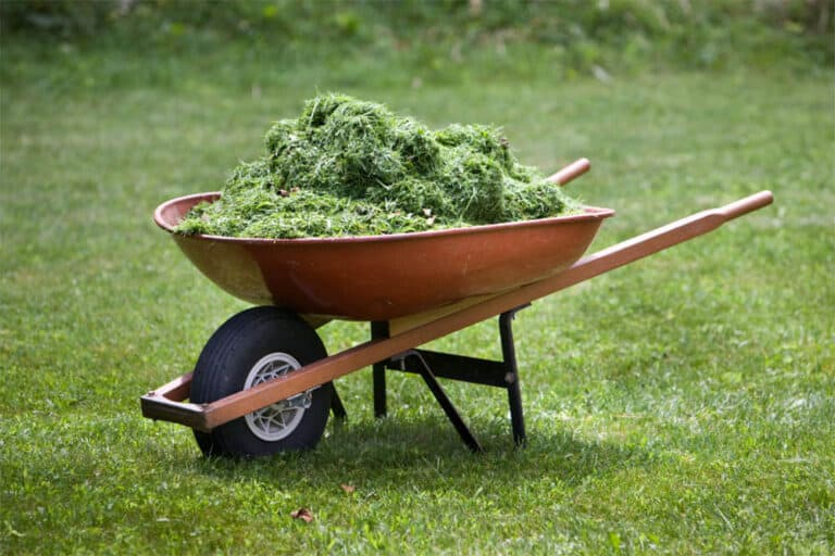 How Long Does It Take For Grass Clippings To Decompose?