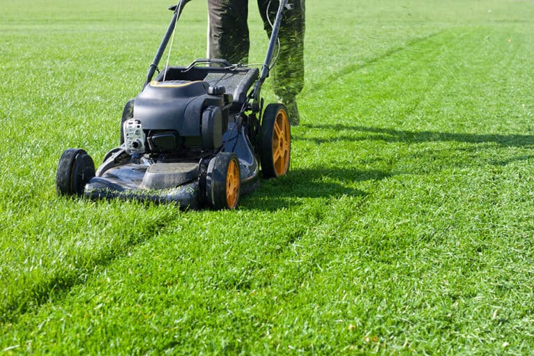 How Long After Overseeding Can I Mow?