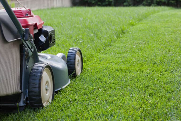 Should You Water Grass After Mowing?