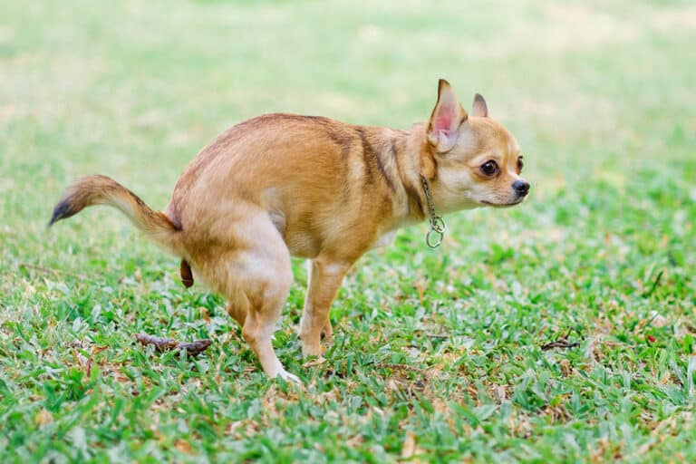 What Dissolves Dog Poop In The Yard?