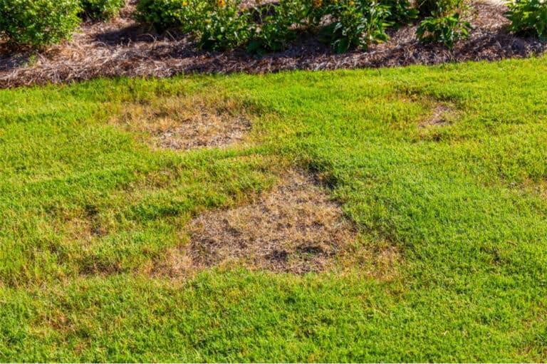 Will Grass Spread To Bare Spots?
