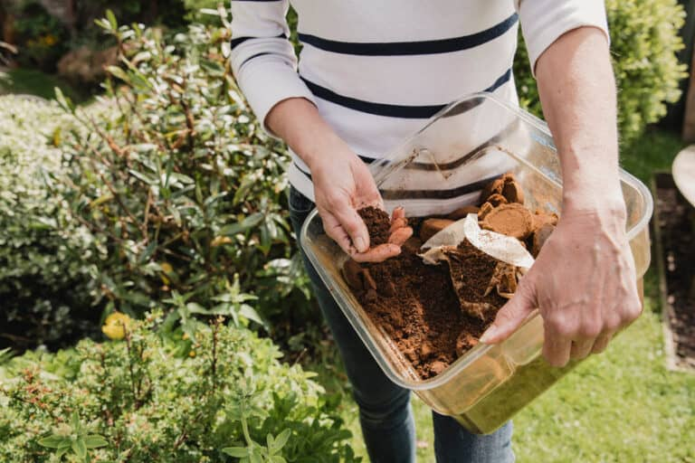 Do Coffee Grounds Kill Ants?