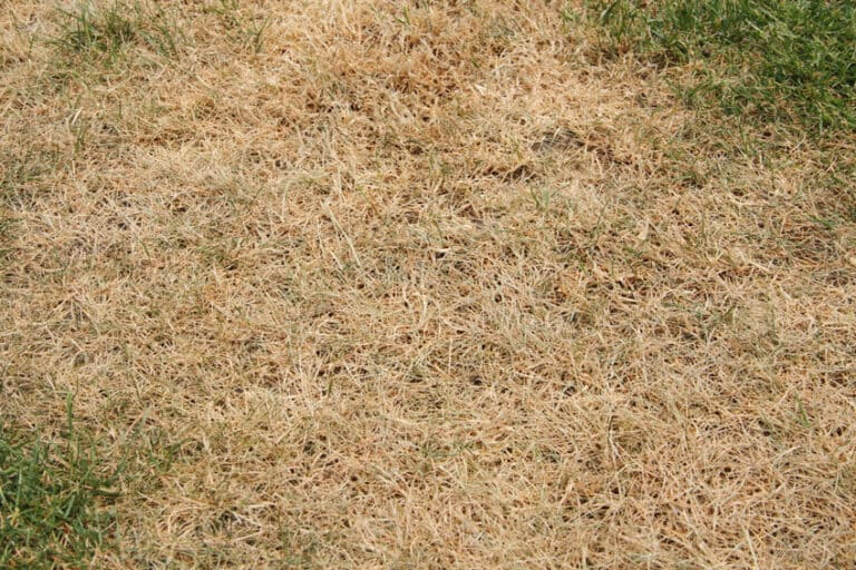 Why Does Grass Turn Yellow After Cutting?
