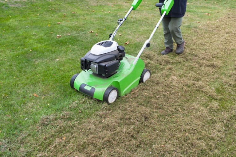 How Much Does It Cost to Dethatch A Lawn?