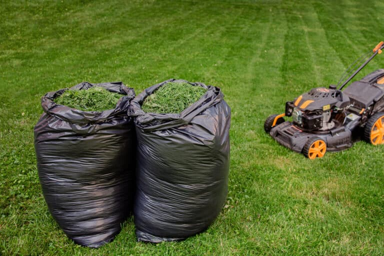 Is it Better to Mulch or Bag Grass?